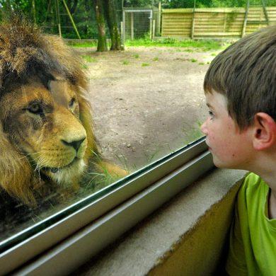 Zoológicos y parques de animales