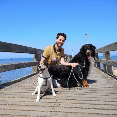 Las playas que admiten perros