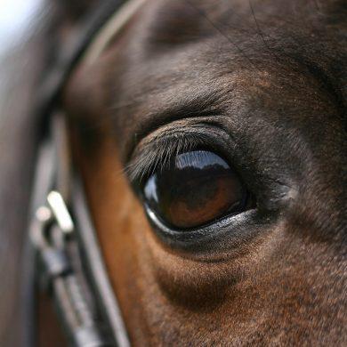 A caballo por Normandía