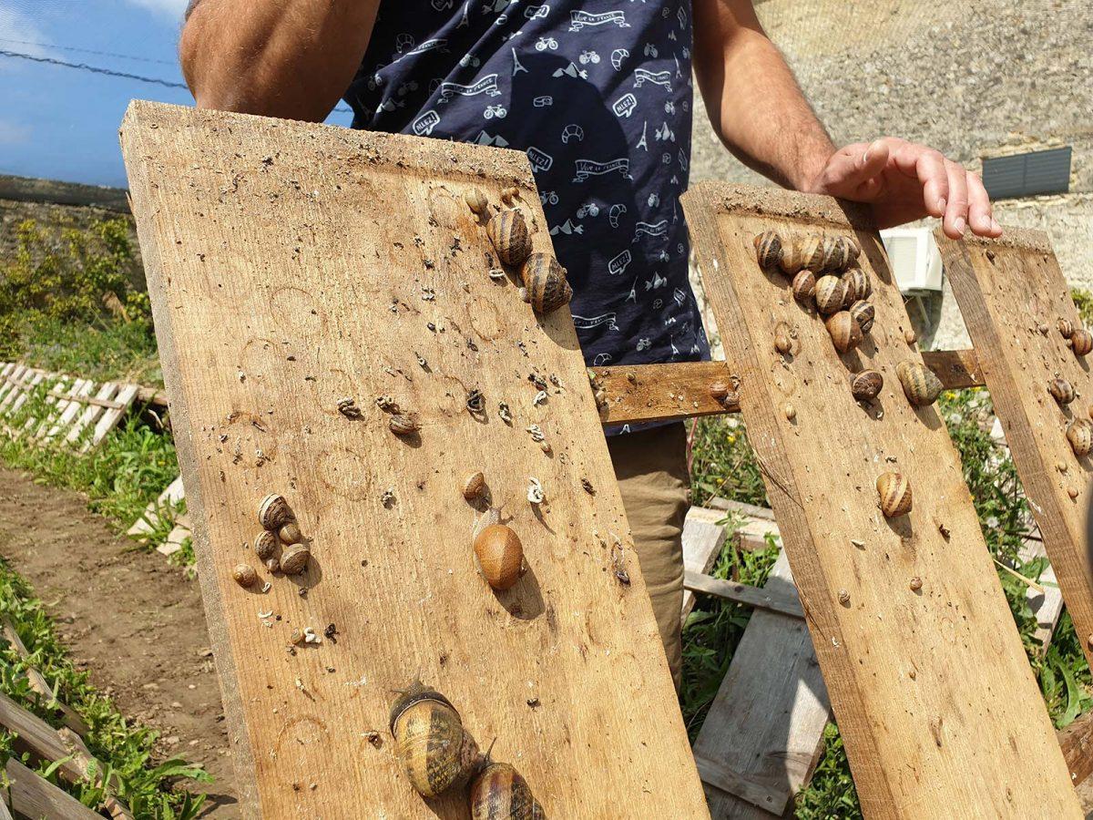Productor de caracoles en la granja de Vailly
